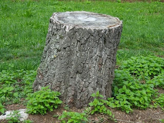 La souche ou le tronc, des tabourets naturels